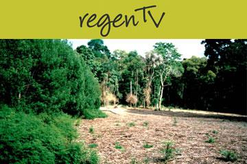 Subtropical rainforest restoration at the Rous Water Rainforest Reserve