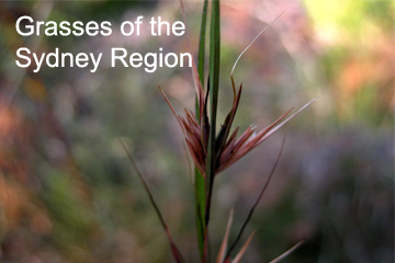 Van Klaphake's Grasses & Rainforest plants ID Workshops