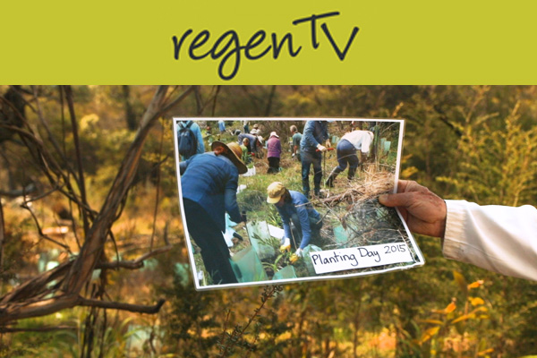 Popes Glen Series – Revegetation