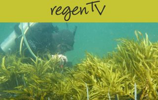 Restoring underwater forests. Ziggy Marzinelli