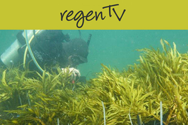 Restoring underwater forests
